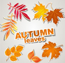 leaves label 01   vector material