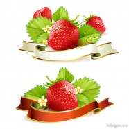 strawberry theme background 03   vector material