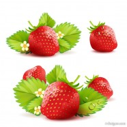 Strawberry theme background 05   vector material