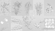 Japanese line drawing of plant flowers vector material  50 dandelion, lily