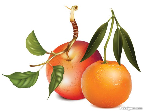 Apples and oranges vector material