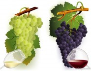 Wine and grape vector material  2