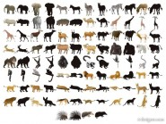 50 models of animal silhouettes vector material