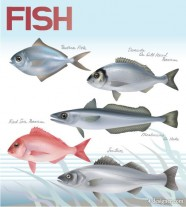 Fish vector material 03   Vector