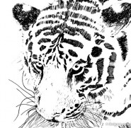 The Tiger Image 16   vector material