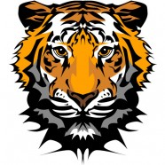The Tiger Image 20   vector material