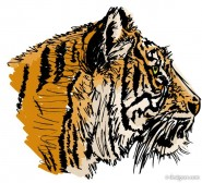 The Tiger Image 29   vector material