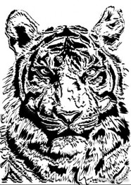 The Tiger Photo 02   vector material