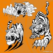 The Tiger Photo 11   vector material