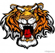 The Tiger Photo 17   vector material