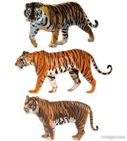 The Tiger Picture 12   vector material