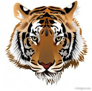 Tiger picture 03   vector material