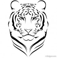 Tiger picture 15   vector material