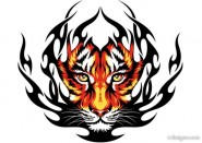 Tiger picture 31   vector material