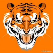 Tiger picture 43   vector material