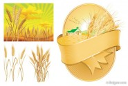 Wheat theme vector material
