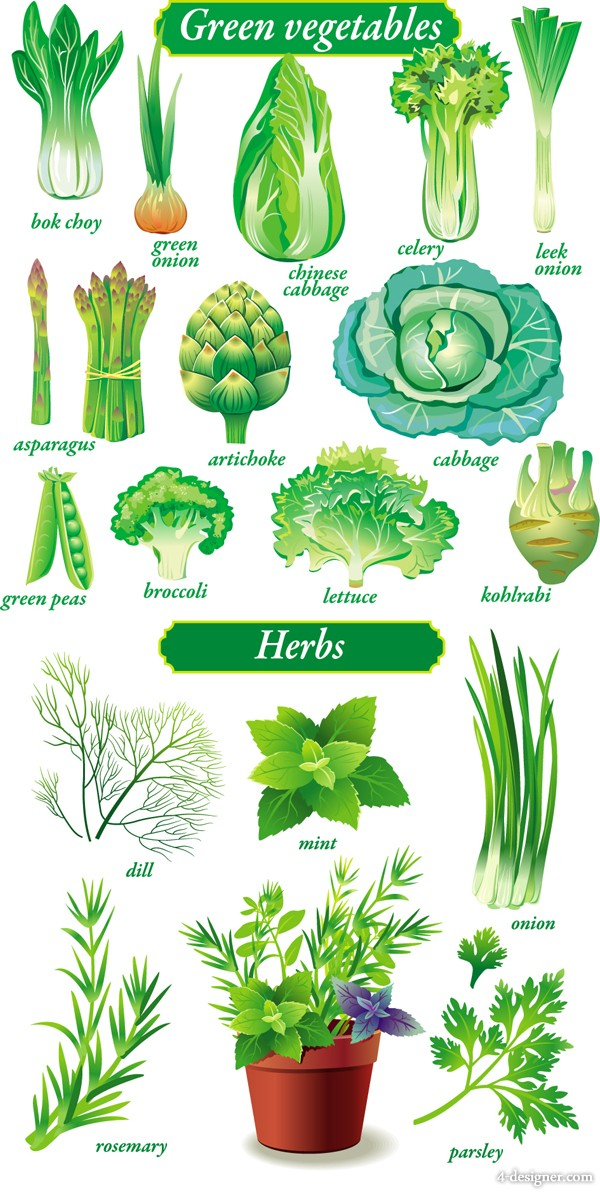 The exquisite green vegetables vector material