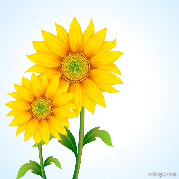 Beautiful sunflower vector material