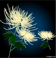 Exquisite chrysanthemum Vector