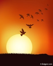 The sunset next flock Vector
