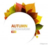 Beautiful leaf background 05   vector material