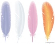 Feathers 02   vector material