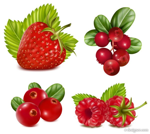 Fruits Image 03   vector material
