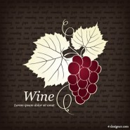 Red wine illustration   Vector