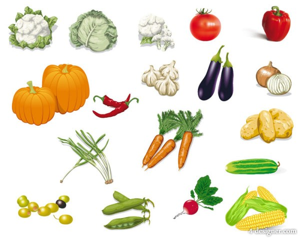 Vegetables Photo 02   vector material