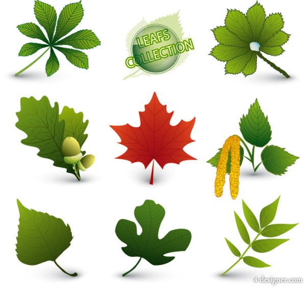 Various leaves form of 05 Vector