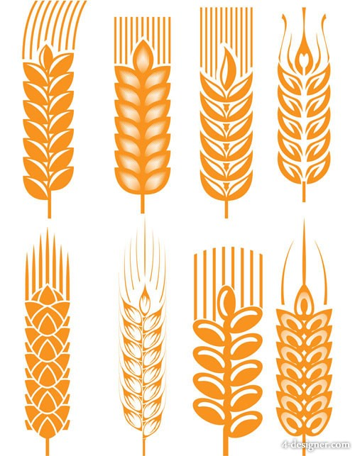 Wheat vector material 03