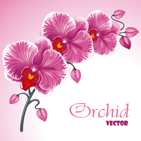 Beautiful flowers background 02 vector material