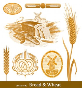 Wheat pictures 01 vector material