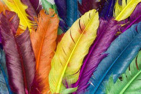 Colorful feathers HD pictures  2