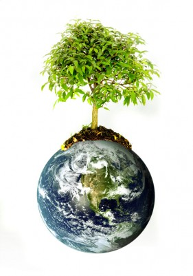 Growth trees on Earth