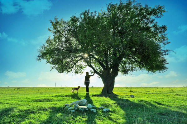 A tree landscape scenery HD Images