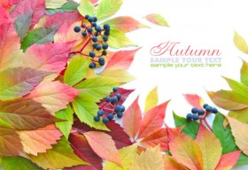 Beautiful autumn leaves 03   HD Images