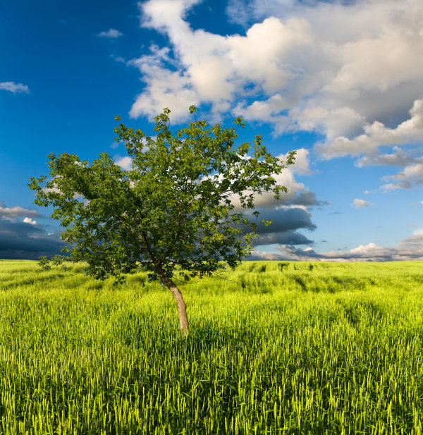 Beautiful grassland high quality pictures  2