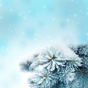 Beautiful pine background picture 04