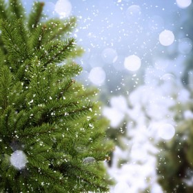 Beautiful snow scenery 05   HD Images