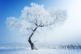 Beautiful snow scenery 06   HD Images