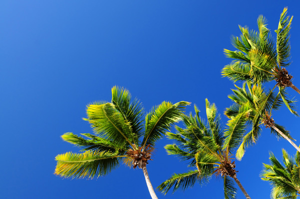 Blue sky and coconut tree HD picture