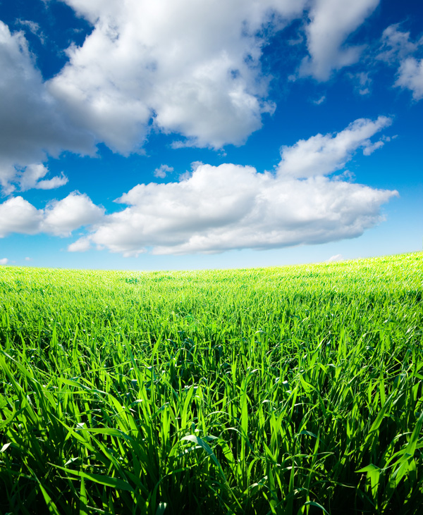Blue sky grass from the grass HD picture  5