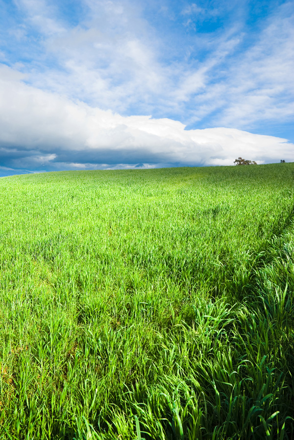 Blue sky grass from the grass HD picture  6