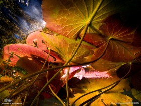 High quality pictures of beautiful leaves background