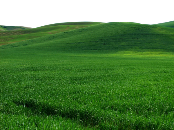 High quality pictures of the vast expanse of green grass