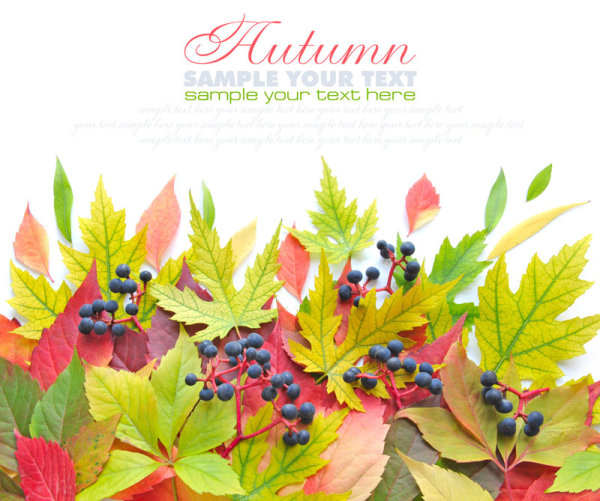 In fine autumn leaves 01   HD Images