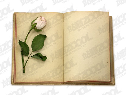 Roses with old books in this fine picture