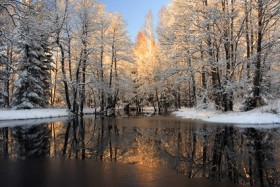 The Forest Images in snowmelt
