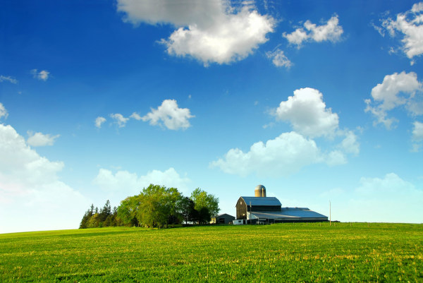 The grass large tree house blue sky and white clouds high definition picture